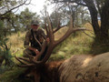 A trophy elk if I ever saw one.