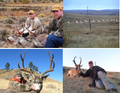 Pictures of elk, antelope and mule deer.