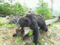 That's a damn big Idaho black bear.