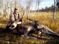Back country Idaho mule deer.