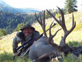 An Idaho mountain buck mule deer.