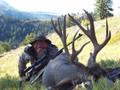 An Idaho mountain buck mule deer.