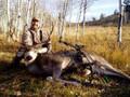 Back country Idaho mule deer.