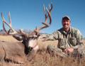 Big open country mule deer.