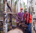 Big bull elk during rifle season with a guide.