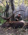 Excellent elk trophy for a DIY hunt
