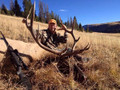 Even good elk can be found on USFS in the San Juan mountains.