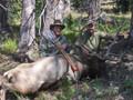 Archery elk hunt calling them in close for a shot.