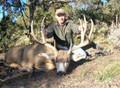 Good mountain mule deer buck.