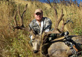 Archery mule deer trophy.