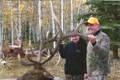 Nice bull elk in Colorado
