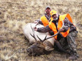 Happy hunters with their elk.  Now the work starts.