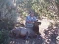 Cow elk hunting success.