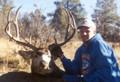 Nice trophy mule deer.