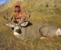 Trophy Colorado mule deer buck.