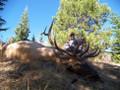 """Wyoming elk average 325"""" trophies."""