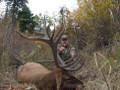 Another trophy Wyoming elk.