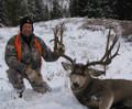 Trophy mule deer in WY.