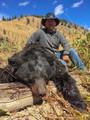 Huge black bear in Wyoming.