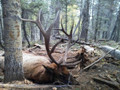 Trophy elk hunting in New Mexico.