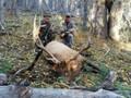 Happy elk hunters.