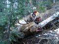 Bull elk hunt in high country.