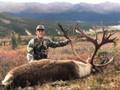 Nice caribou in Alaska