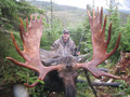 Trophy Newfoundland Canada moose.