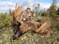 Trophy Newfoundland Moose