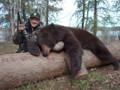 Nice big black bear in Canada.