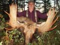 Newfoundland Canada moose