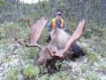 Big bull moose.
