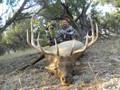 GMU061 trophy elk hunt.