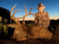 Trophy whitetail.