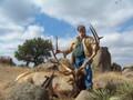 Hard horned bull elk.