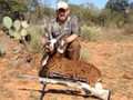 Exotic goat and ram hunts.