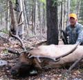 Very wide bull elk.
