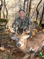 Nice whitetail buck deer.