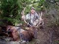 Elk sometimes get into tough locations.