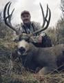 Nice mountain mule deer buck.