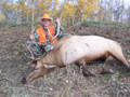 New Mexico has fewer elk than Colorado but can have higher quality.
