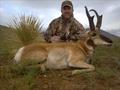 Trophy antelope in NM.