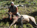 Cow elk is a trophy too.