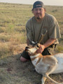 Nice open country pronghorn.