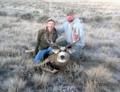 Free ranging mule deer in South Dakota