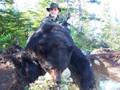 The bear in Canada get big.