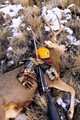 Semi-guided mule deer hunt.