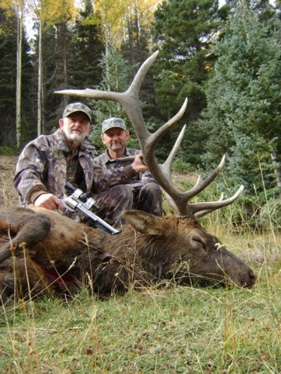 Nice bull elk on a guided hunt.
