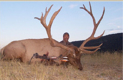 "Big 300"" plus bull elk"