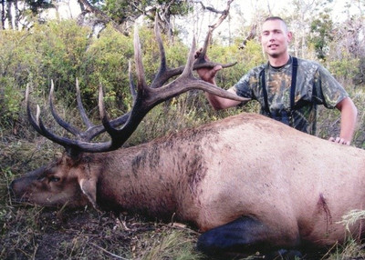 Dark chocolate antlered 6x6 bull elk.